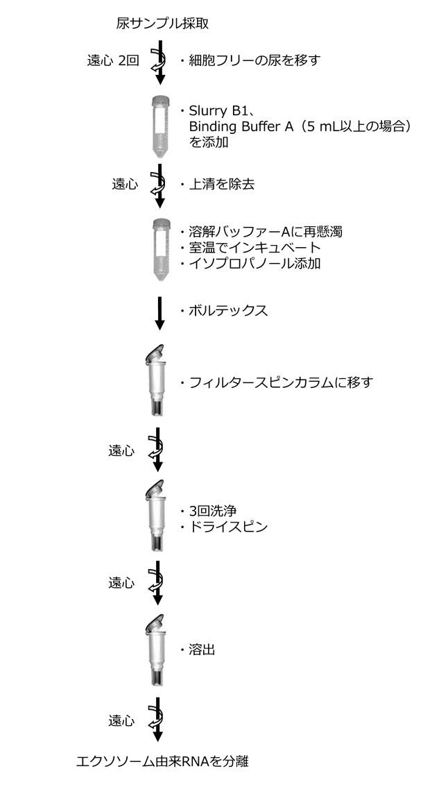 尿中のエキソソームRNA精製キットのプロトコール