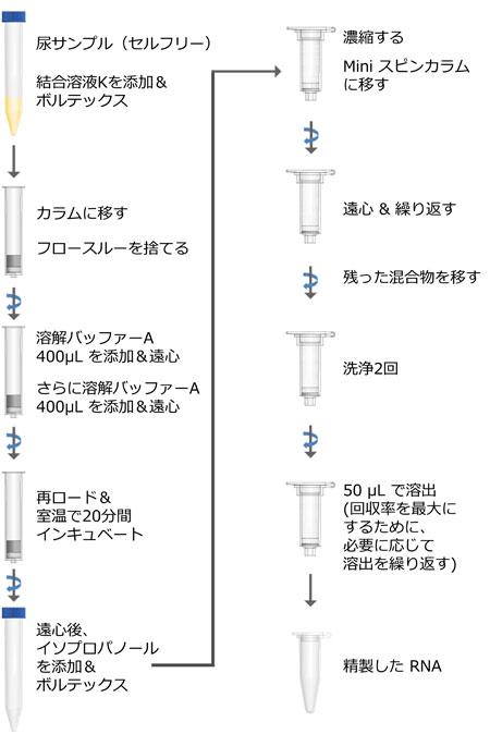 Urine Cell-Free Circulating RNA Purification Midi Kit プロトコール