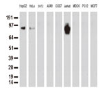 9種の細胞株からの抽出物(35ug)をanti-PECAM1 モノクローナル抗体を使ってウェスタンブロット解析 Clone UMAB29