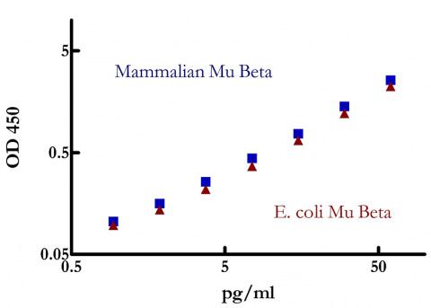 哺乳類発現または大腸菌(E.coli)発現のマウスIFN-βを用いたELISA反応性の比較