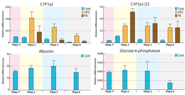 本商品を上記のスケジュールで2 種類の薬剤(Omeprazole、Phenobarbital)による影響を遺伝子発現で解析