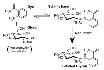 2-AB による糖鎖の標識