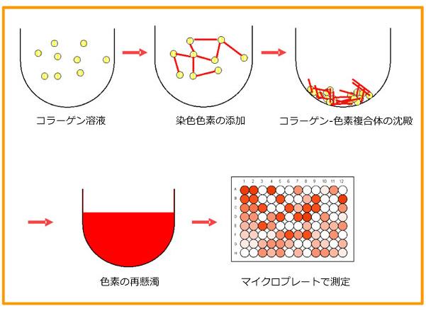 可溶性コラーゲン定量アッセイキットのアッセイ原理