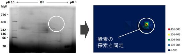 酵素に着目した新しいオーム解析(Enzymomics)の研究手法