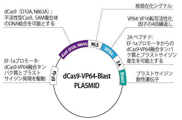 CRISPR-dCas9-VP64 palsmid