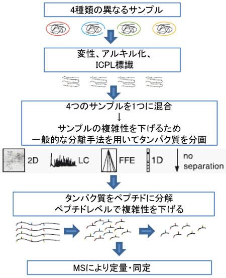 ICPL Quadruplex PLUSキットのワークフロー