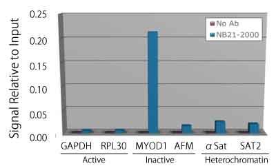 ヒストンH4リン酸化セリン1抗体(品番:600-401-I96)を用いたChIPアッ セイ
